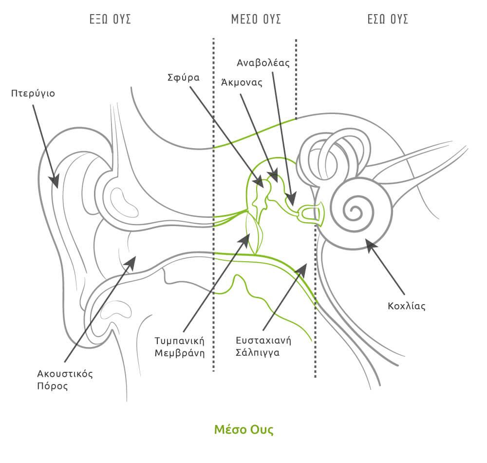 Μέσο ους, ανατομία αυτιού, τύμπανο αυτιού, τύμπανο, τυμπανική μεμβράνη